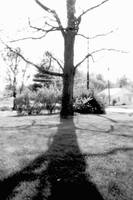 tree in front yard by spacingham