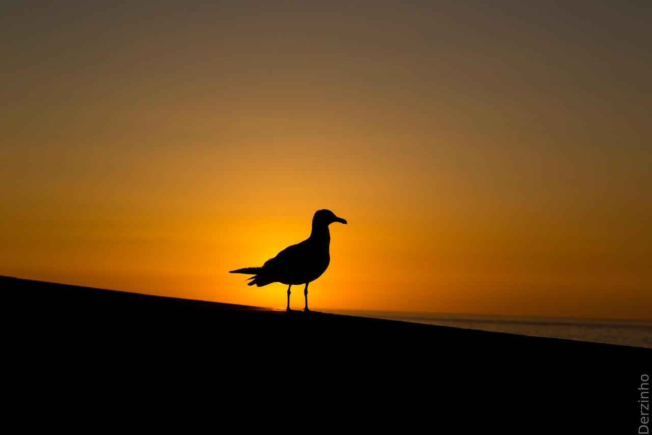 Bird Sunset 368853392