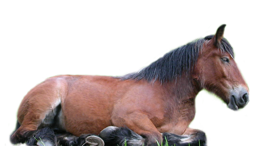 Horse PNG stock by lubman