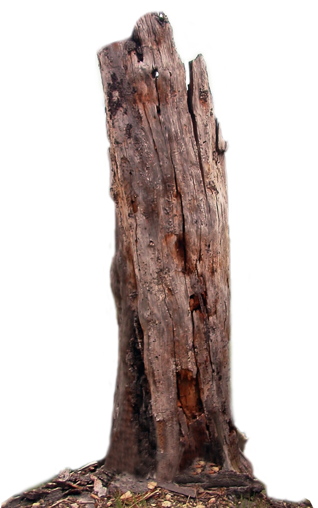Dead tree PNG stock by lubman on DeviantArt
