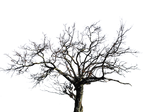 Tree PNG stock