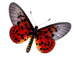 Butterfly 1 PNG stock