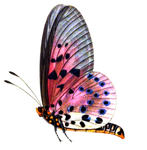 Butterfly 2 PNG stock