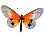 Butterfly 3 PNG stock