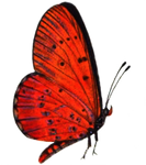 Butterfly 4 PNG stock