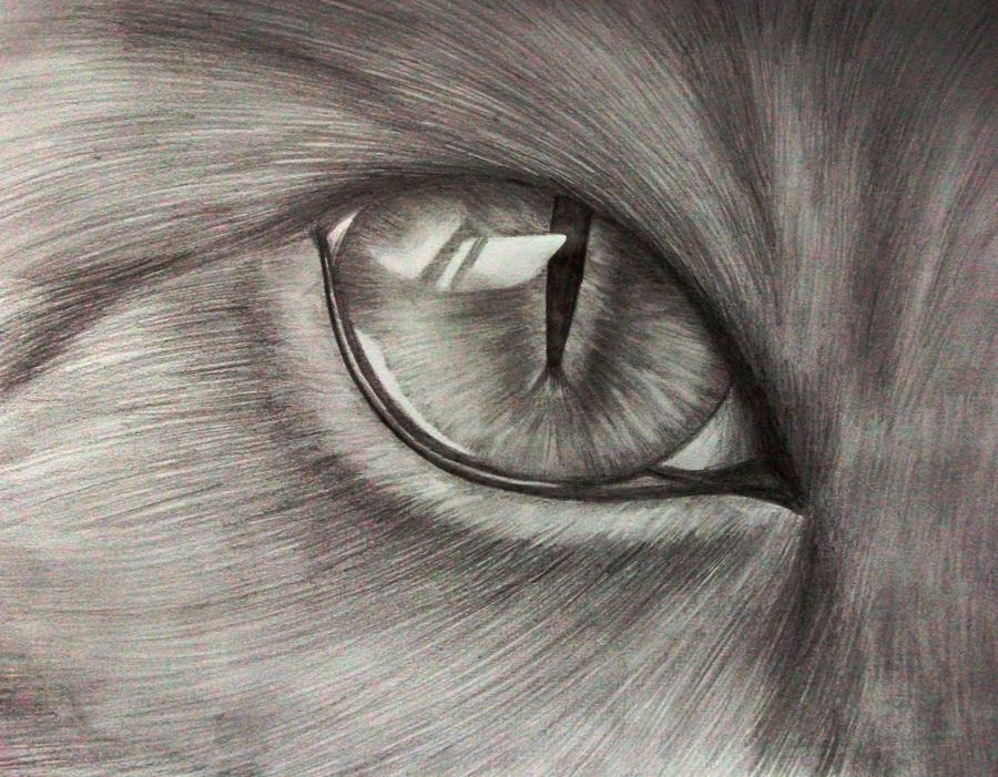 eye to eye by x----eLLiE----x