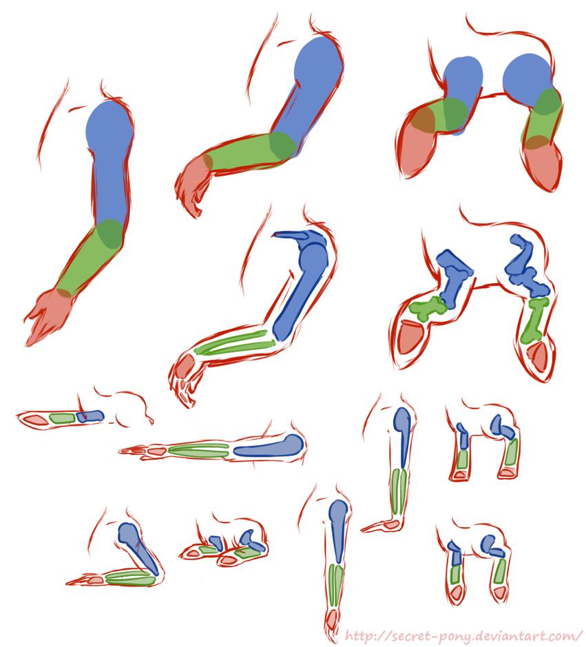 Pony Anatomy Tutorial: legs and joints by secret-pony on DeviantArt