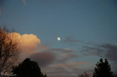 Solstice Moon by DaLuce