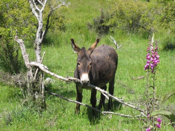 Donkey by Rochdur