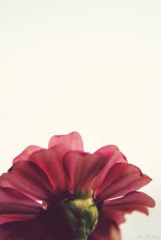 ::Bloom::