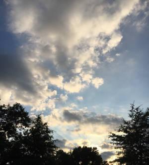 Sunset over the dark trees (Stock)