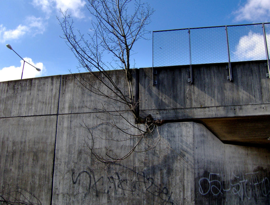 Tree Out Of The Wall by Hunden73