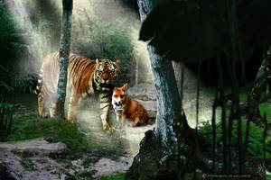 Fox-and-tiger