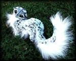 -SOLD-Posable Siberian Baby Dragon!