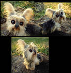 -SOLD- Hand Made Poseable Yorkie! by Wood-Splitter-Lee
