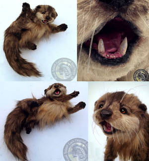 -SOLD- Hand Made Poseable Realistic Otter!