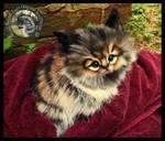 SOLD Handmade Kitten