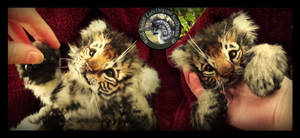 SOLD- Handmade Poseable Baby Tiger Cub!