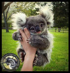 SOLD- Handmade Poseable Baby Koala Bear!