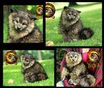 Sold Handmade Poseable Baby Timber Wolf Pup