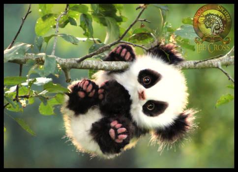 SOLD  HANDMADE Poseable Baby Panda! Glummy-Bear!