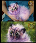 SOLD Cotton Candy Kitten