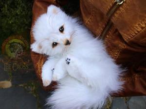 Sold, Baby Arctic Fox!