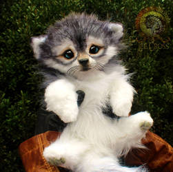 Sold, Poseable Baby Wolf Pup!