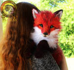 Sold, Poseable Red Fox!