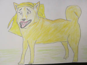 Sharon 'Finnish' Spitz Braceface Dog TF