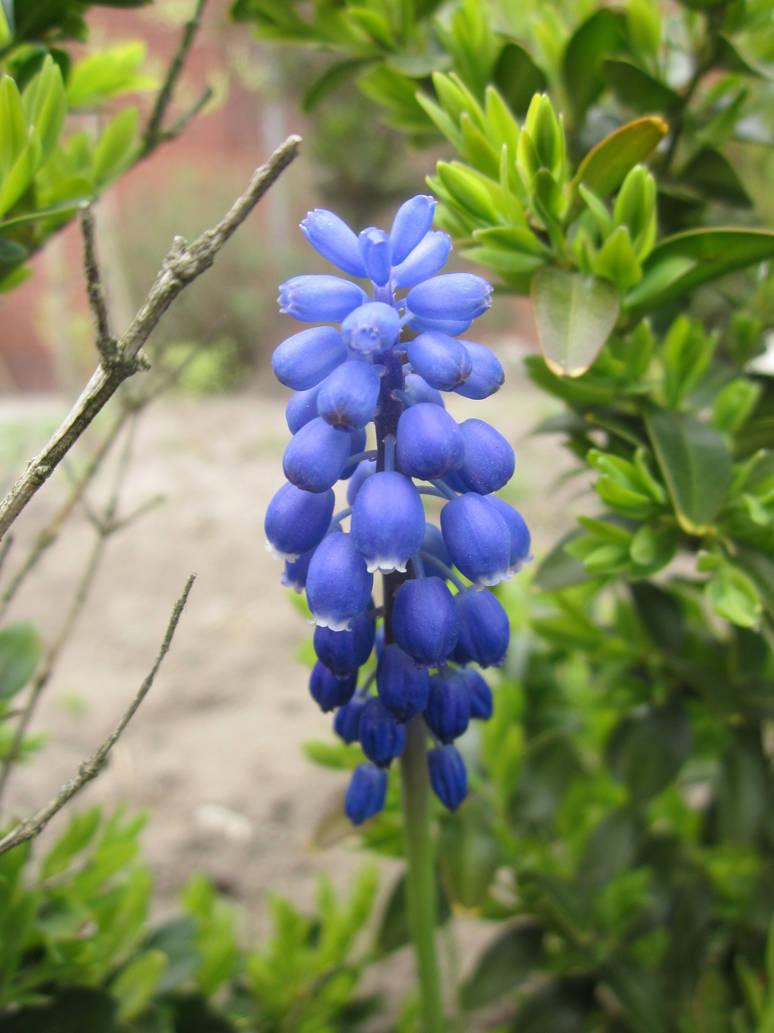 Flowers blue 2