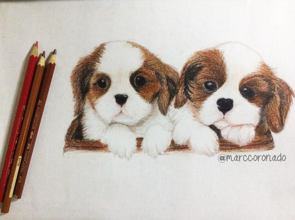 Color Pencil Drawings 2 Cute Puppies By Marccoronado On