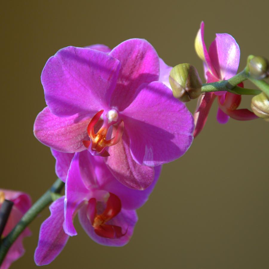 La orquídea, la flor más bella del mundo