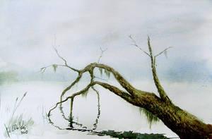 Tree and lake by mwolski