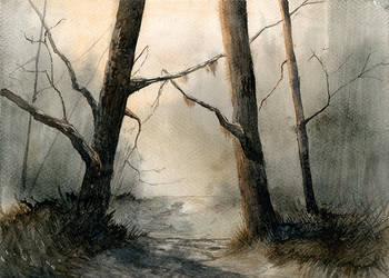 Forest by mwolski