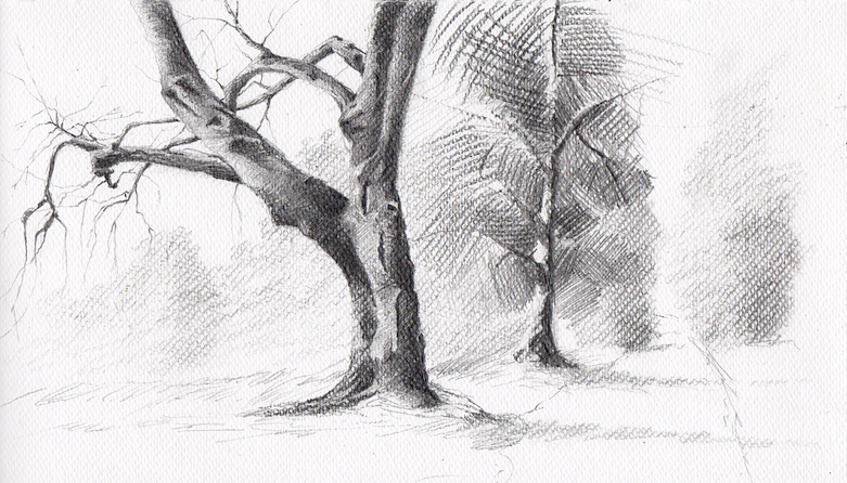 The old tree sketch by mwolski