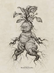 Mandrake Baby by AudreyBenjaminsen