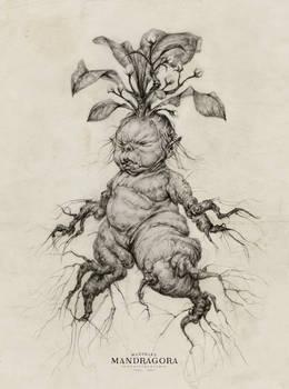 Mandrake Baby