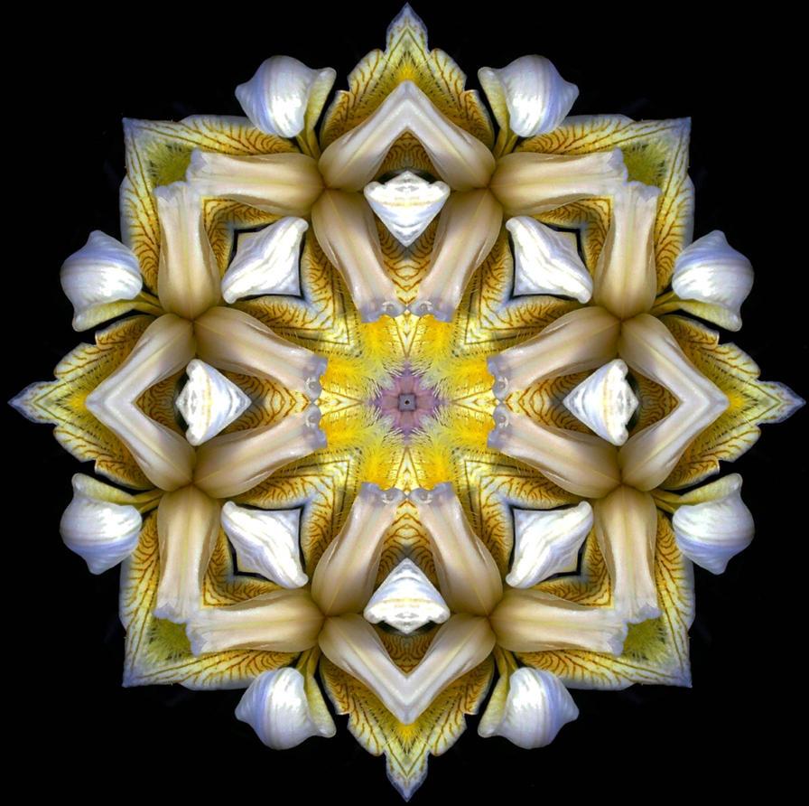 yellow iris by shortbusartist