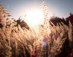 Backlit Flowers With Sun Flare
