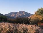Calistoga California Mountain