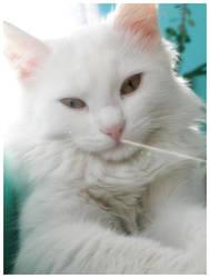 kitty by polonu