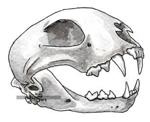 Linx crani by VickyTico