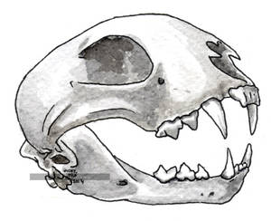 Linx crani