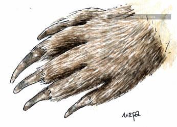 Marmota urpa by VickyTico
