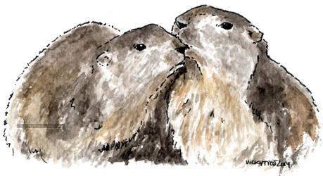 Marmota parella