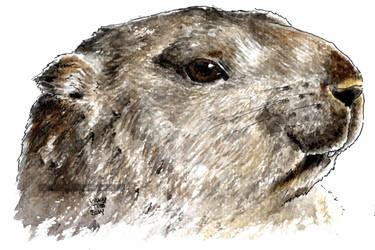 Marmota cap by VickyTico