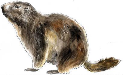 Marmota cos sencer by VickyTico
