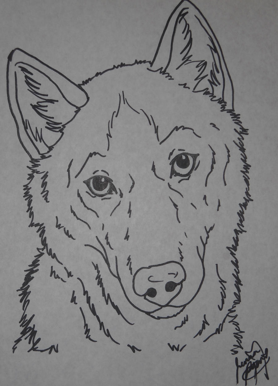 Coloring Page Husky Pictures To Pin On Pinterest