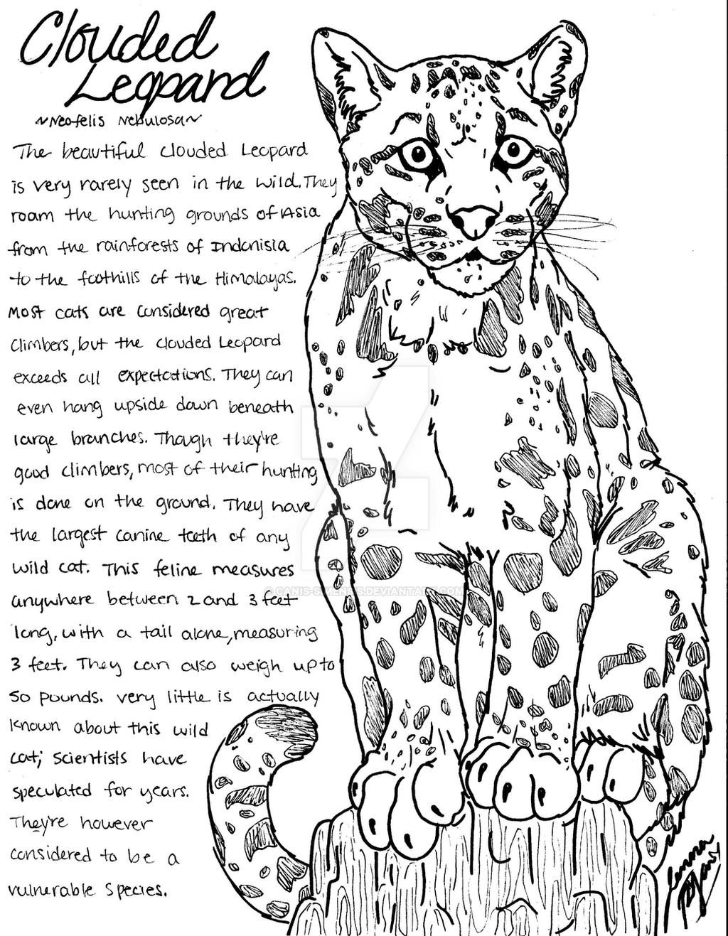 clouded leopard coloring page by canis simensis on deviantart